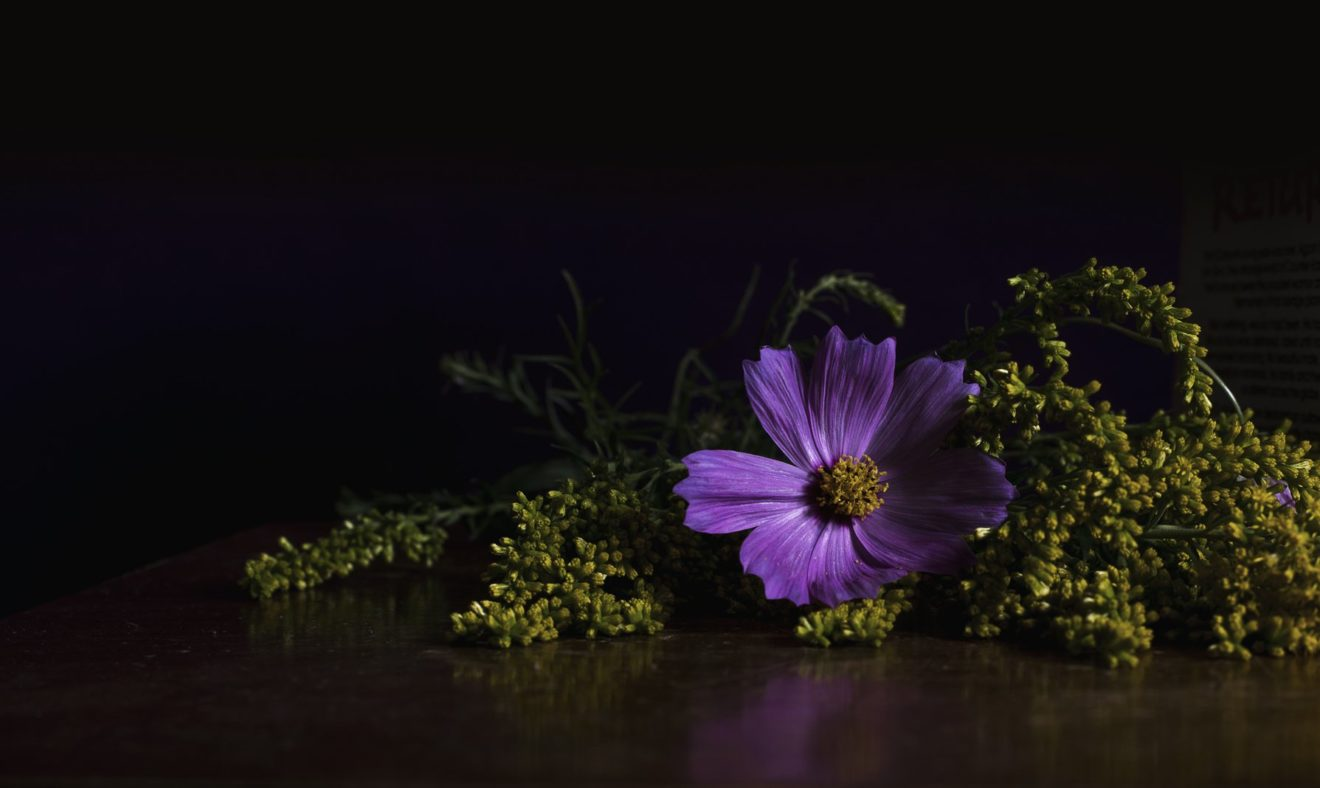 bright-purple-flower