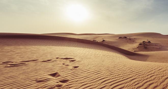 Banniere newsletter chameau