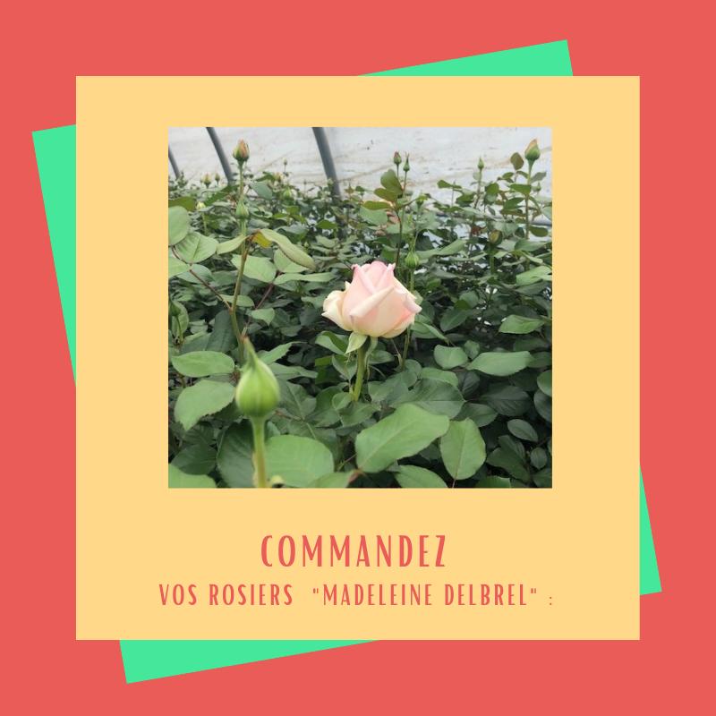 "Commandez vos rosiers ""Madeleine Delbrêl"""